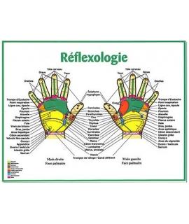 8.5 x 11 - Réflexologie des mains