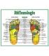 8.5 x 11 - Réflexologie des pieds